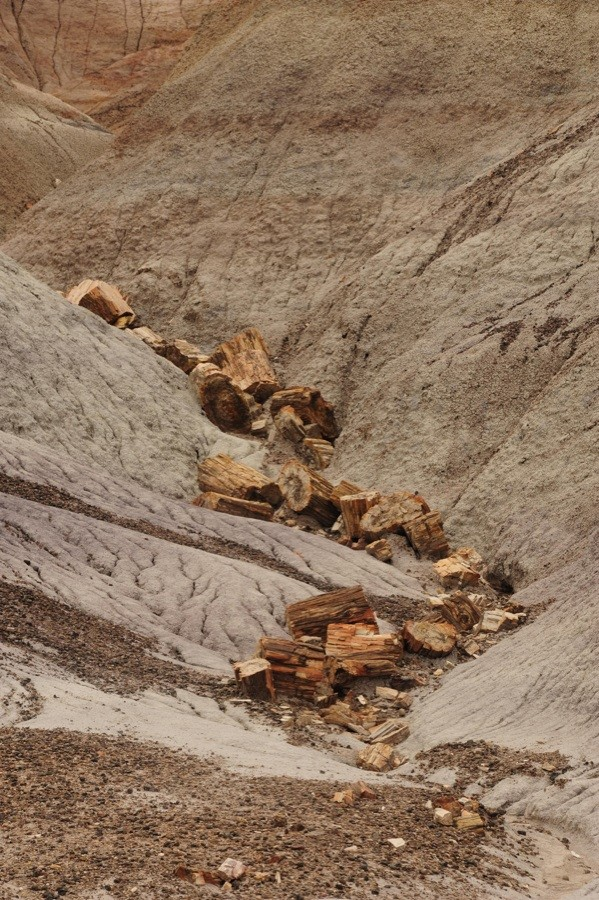 Logs in a Gully, Petrified Forest National Park