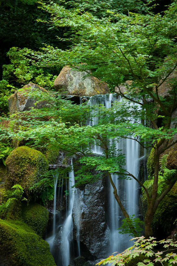 Japanese Garden Waterfall Dave Wilson Photography