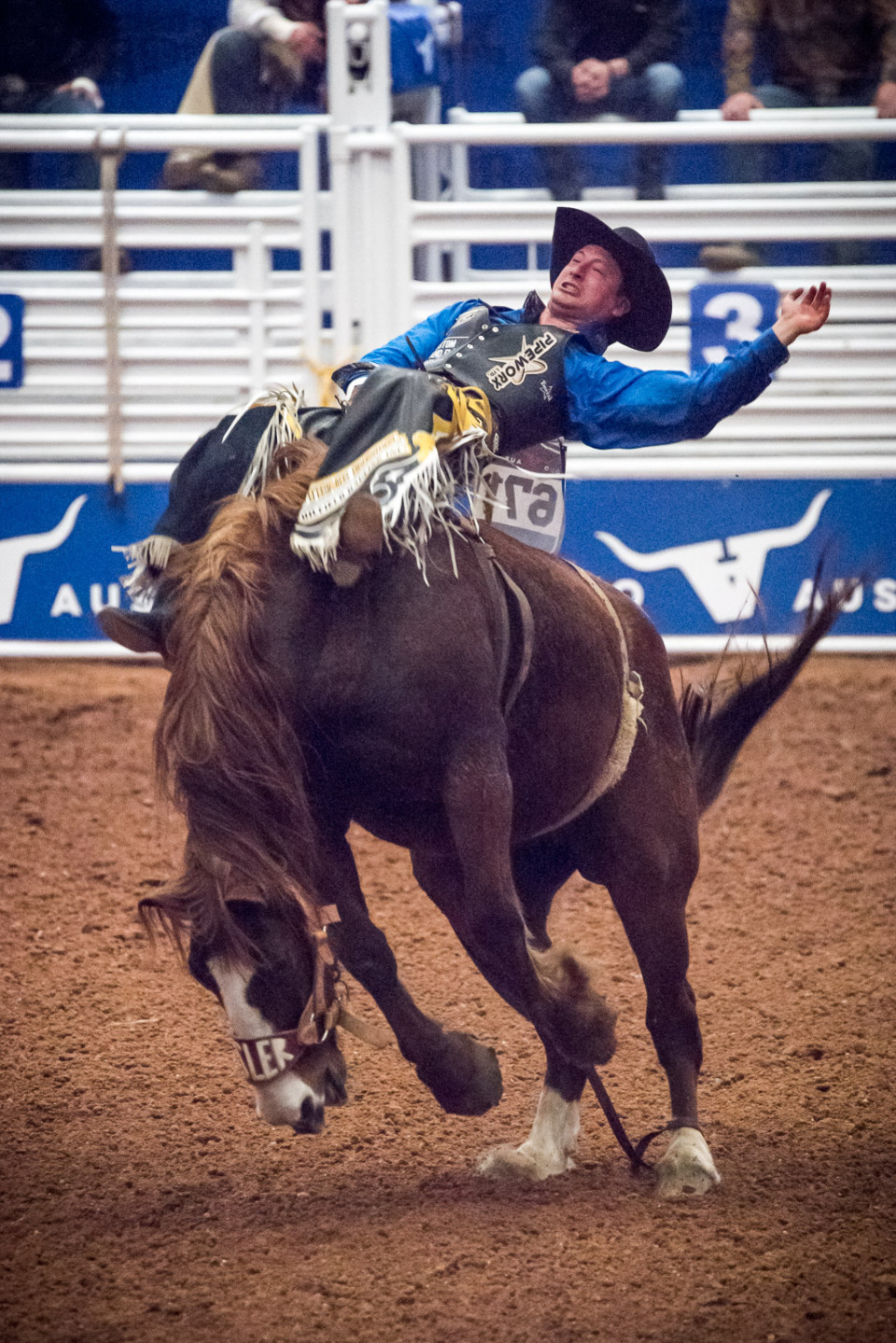 Rodeo Austin Dave Wilson Photography